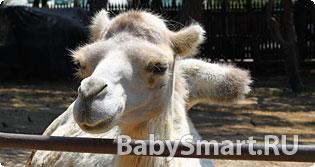 Как не тратить лишние деньги в зоопарке?
